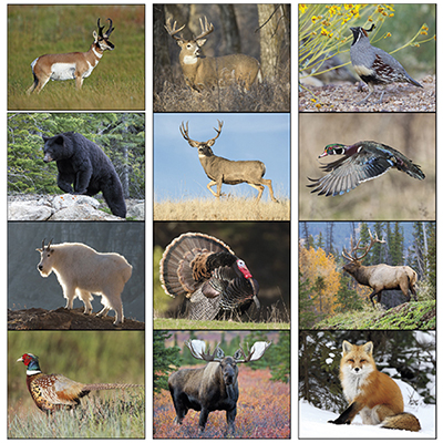 16008 - Wildlife Portraits Calendar