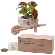 promotional wooden wheel barrow blossom kit