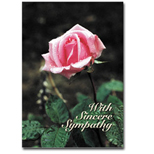 With Sincere Sympathy pink rose Holiday Greeting Card